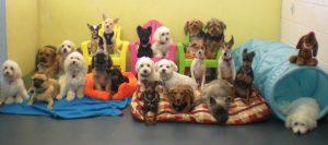 Prêt gouvernemental de 23 845 $ pour une garderie pour chiens